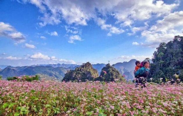 Ha Giang Tam Giac Mach flowers festival